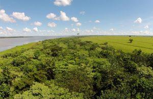 ブラジル熱帯雨林