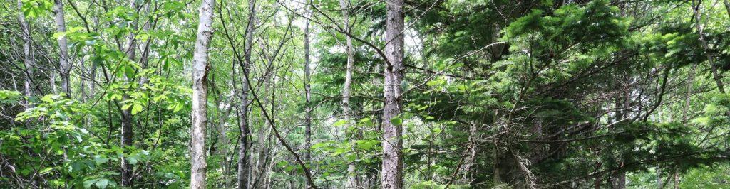 Forest in Hokkaido